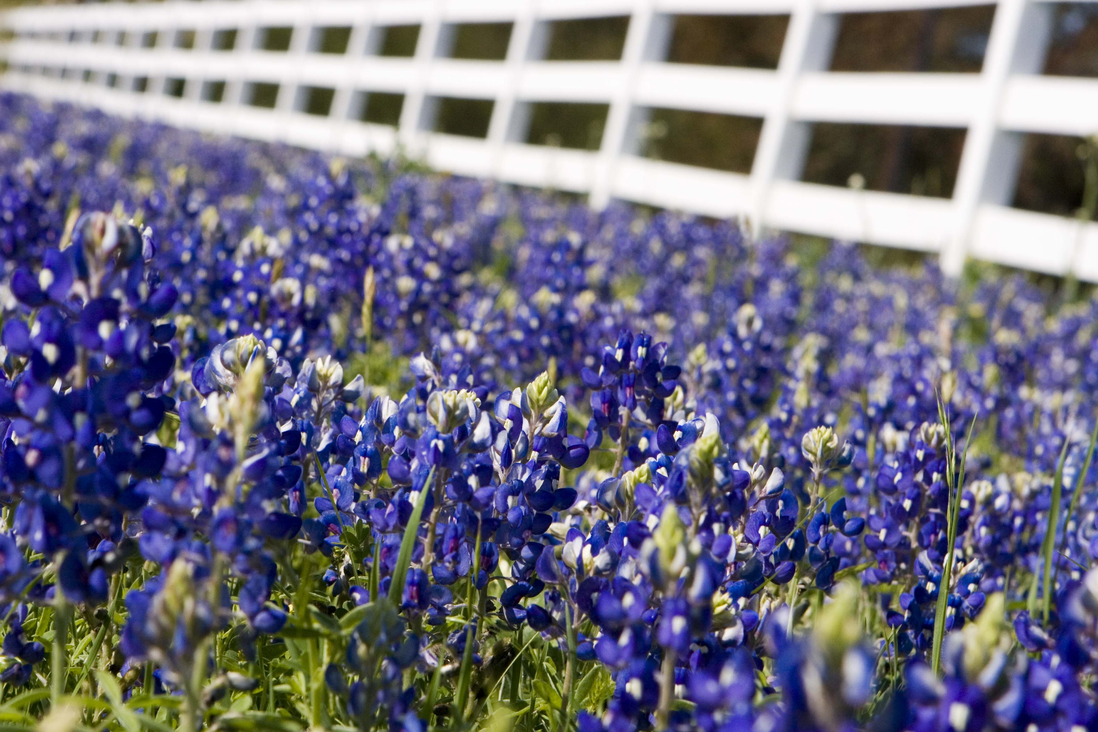 Spring in Texas means it's time to drive through the Hill Country to photograph the wildflowers!