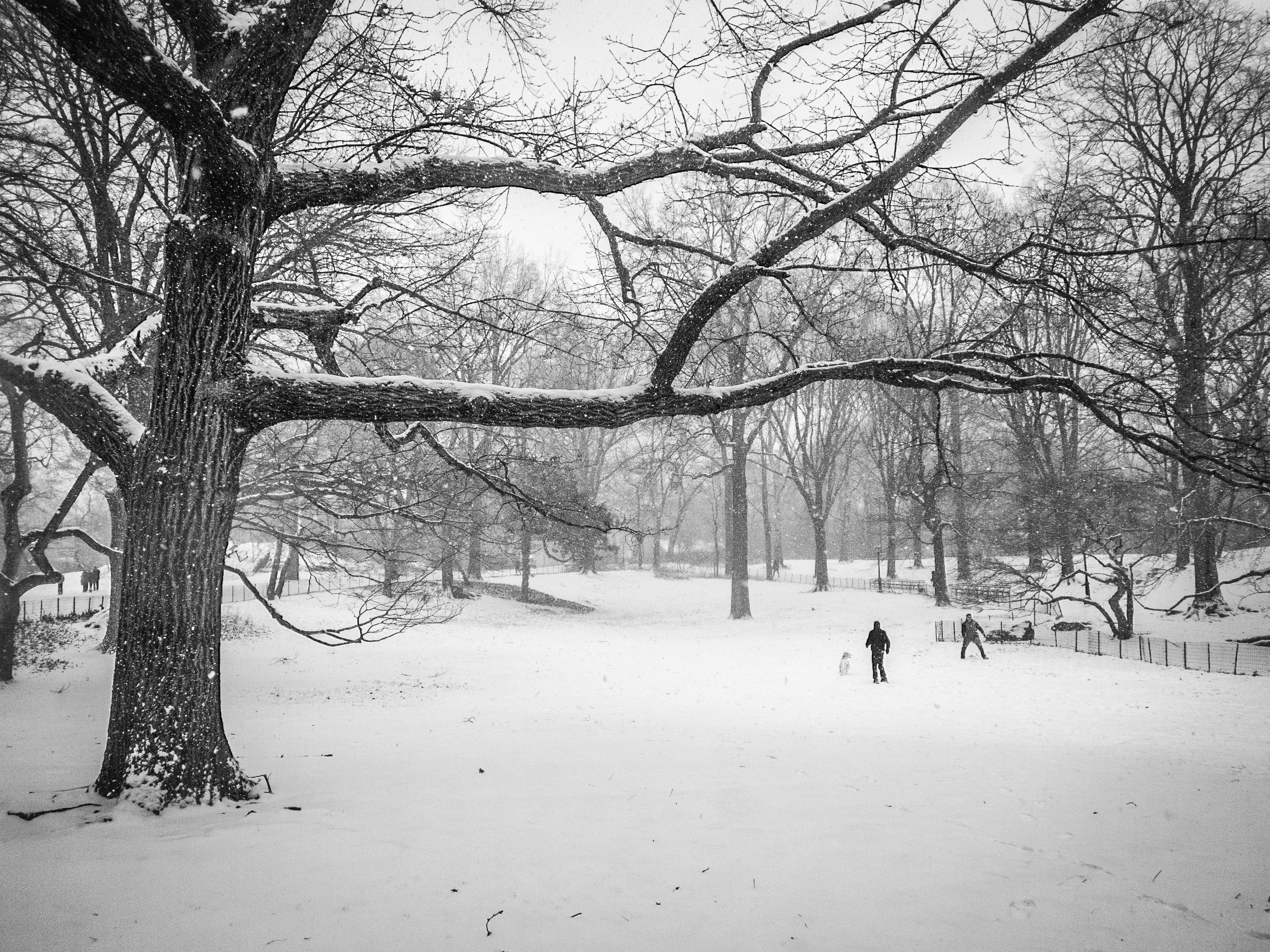A December snowstorm in Central Park, New York City.